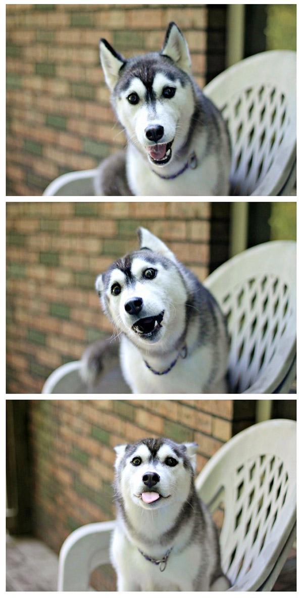 Otro perrete más fotogénico que tú