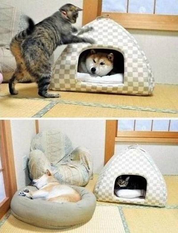 El gato duerme donde quiere