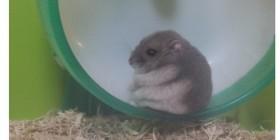 El hamster al que no le gustaba la rueda