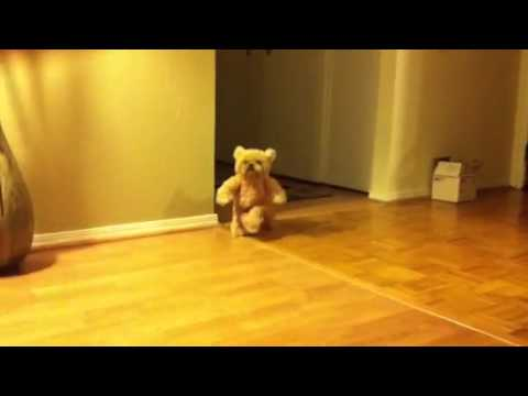Disfraces para perros: Ewok