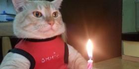 Feliz cumpleaños, gatete