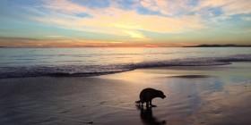 La foto más bonita de un perro