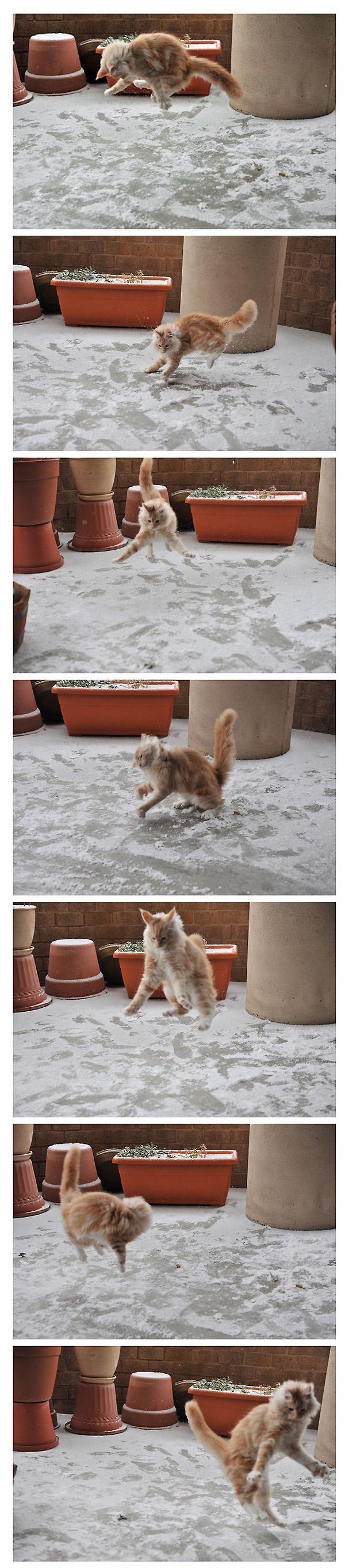 Gato jugando por primera vez con la nieve
