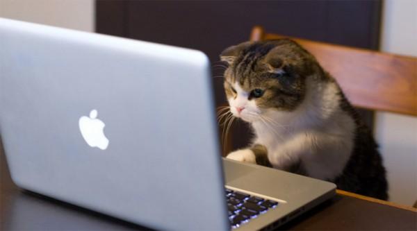 Este es el responsable de que Internet esté lleno de gatitos