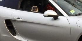 Pug de copiloto