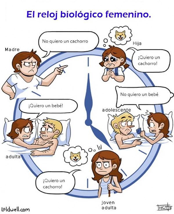 El reloj biológico femenino