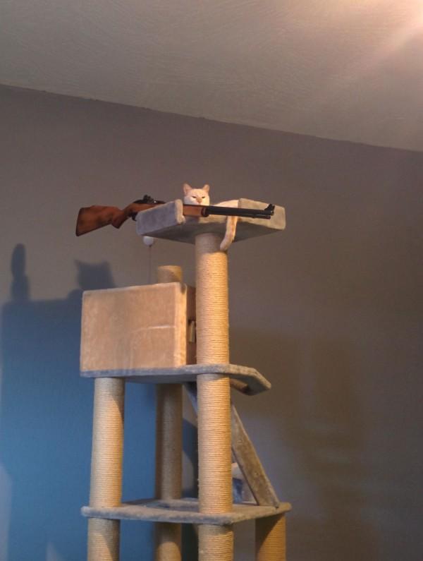 Francotirador gatuno