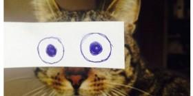 Gatetes con ojos dibujados