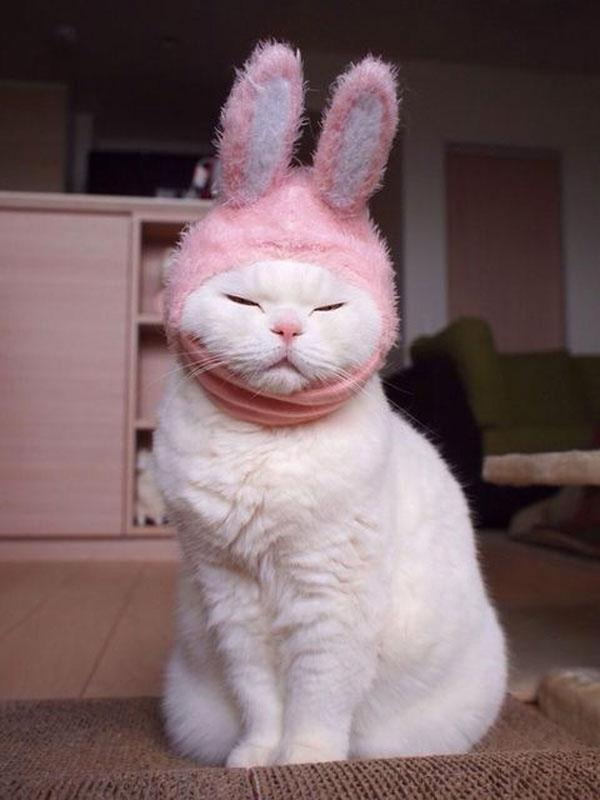 Gatito disfrazado de conejo