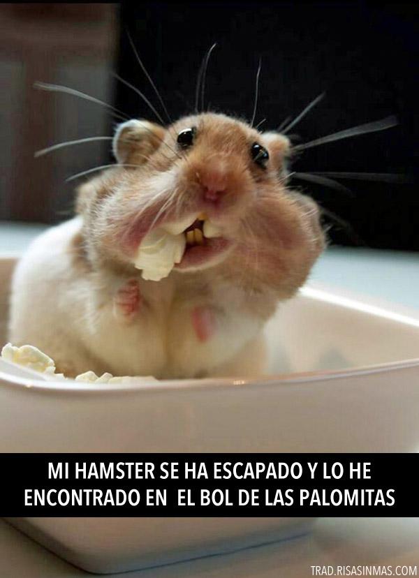 Mi hamster se ha escapado