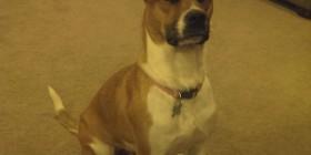 La expresión de la cara de mi perro