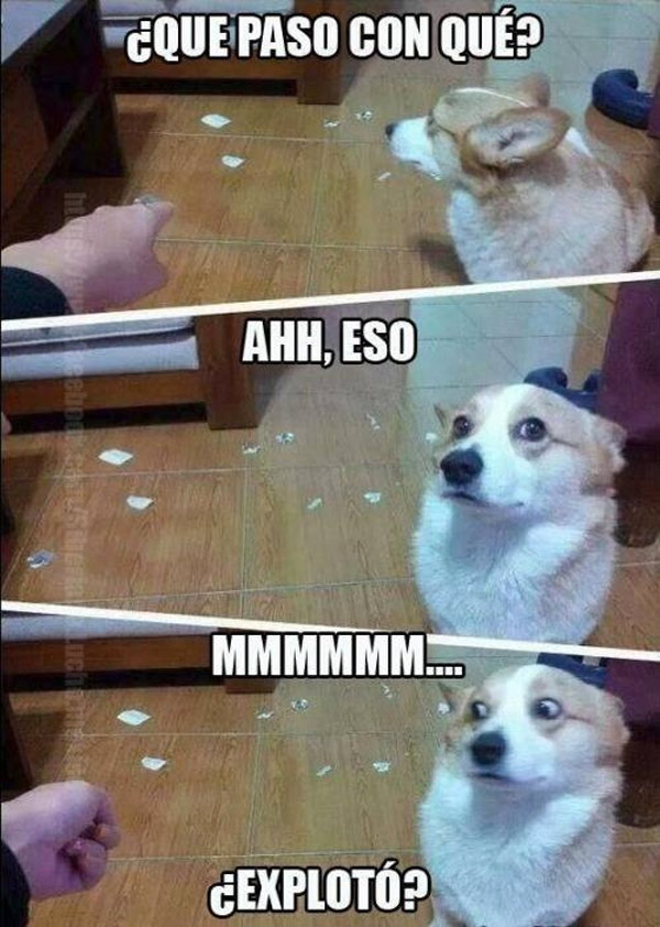 Perro inocente