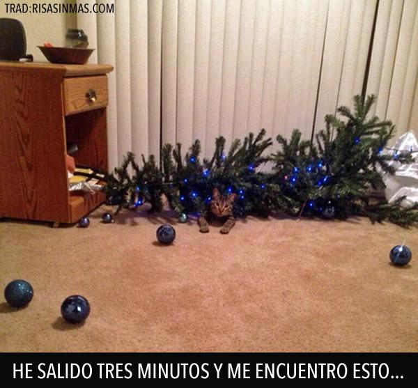 Árboles de navidad y gatos