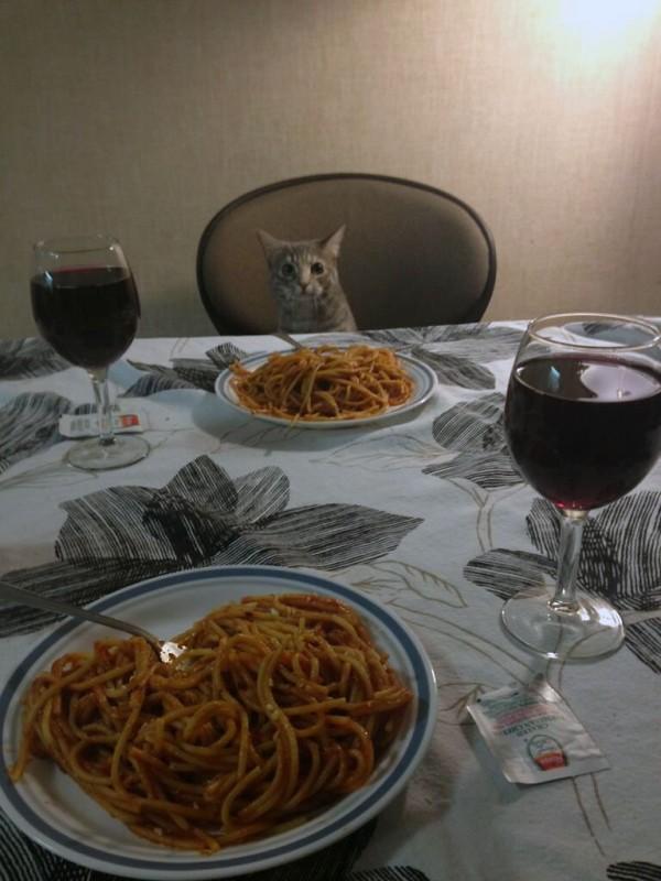 Gatito, es la hora de la comida