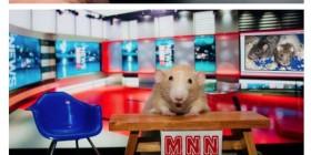 Las aventuras del ratón Marty