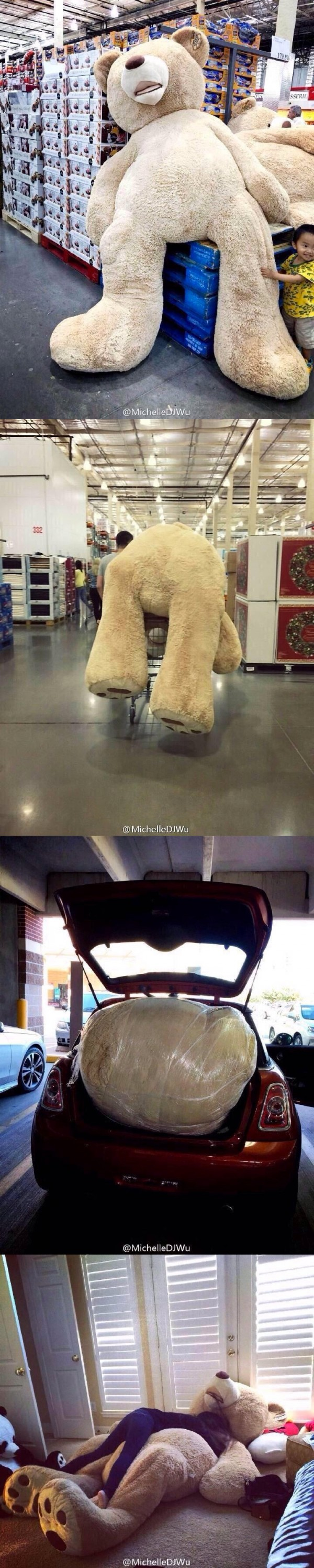 La vida de un oso de peluche