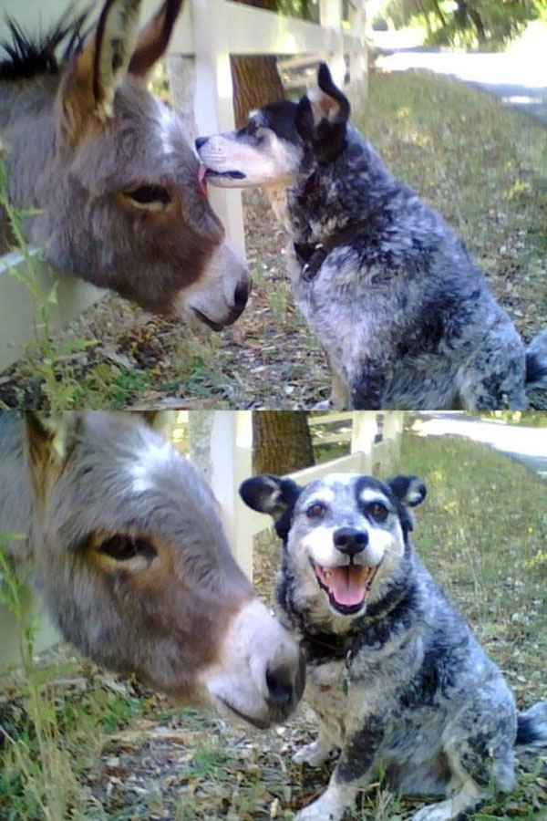 Me sabe a burro