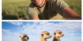 Fotografiando suricatos