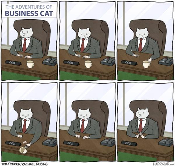 El gato empresario: no lo puede evitar