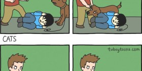 Perros y gatos: diferencias
