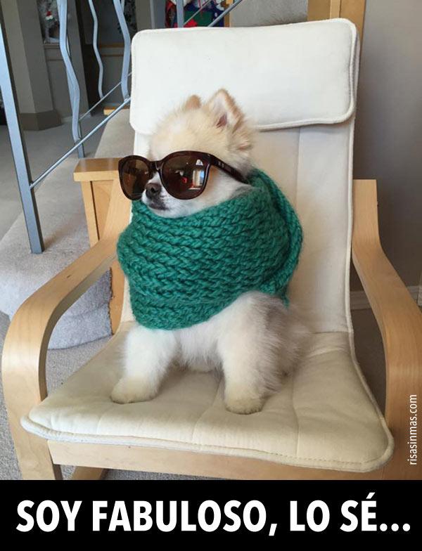 Soy fabuloso, lo sé...