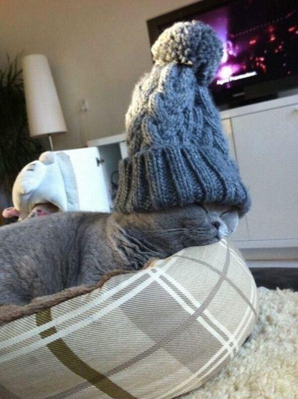A los gatos no les gusta el frío