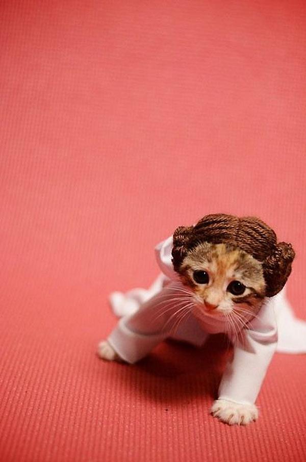 Princesa Leia Gatuna
