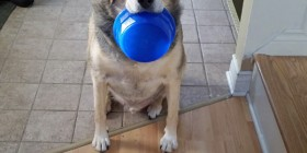 Nuestro perro a dieta