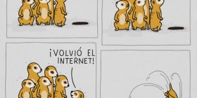 Suricatos e Internet