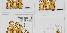 Suricatos e Internet