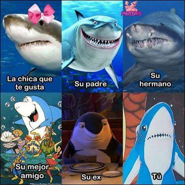 Tu vida de tiburón