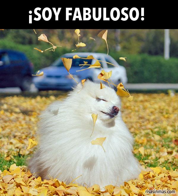 ¡Soy Fabuloso!
