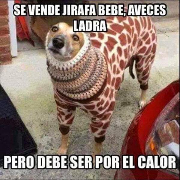 Se vende jirafa