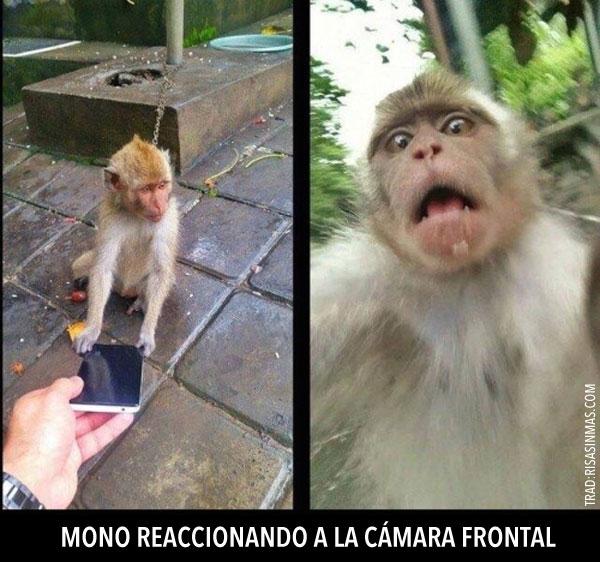 Mono reaccionando a cámara frontal