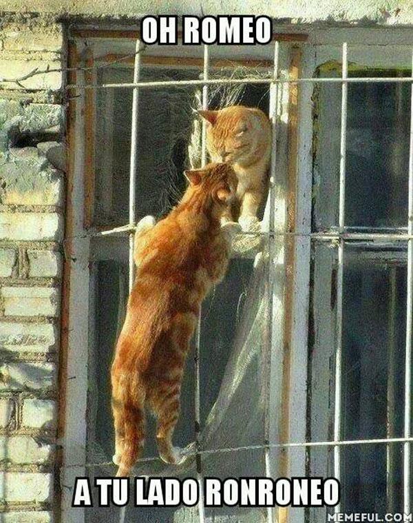 Romeo, a tu lado ronroneo
