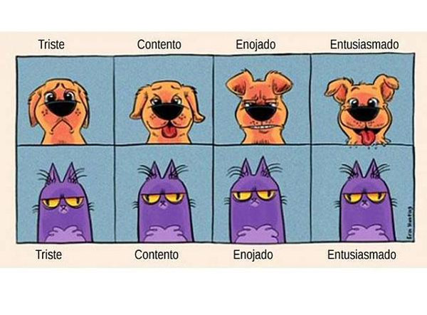 Diferencia entre un perro y un gato
