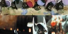 Hospital de murciélagos huérfanos