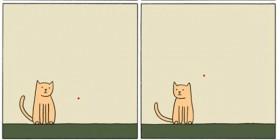 Gato rebelde