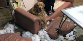 No tenemos ni idea de lo que ha pasado