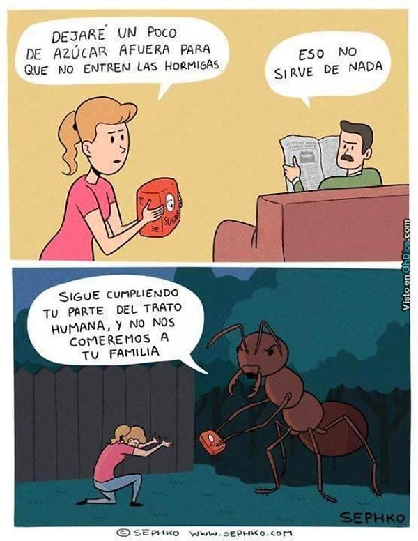 Azúcar para que no entren hormigas