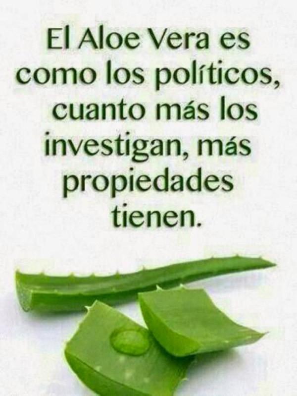 Aloe vera y políticos