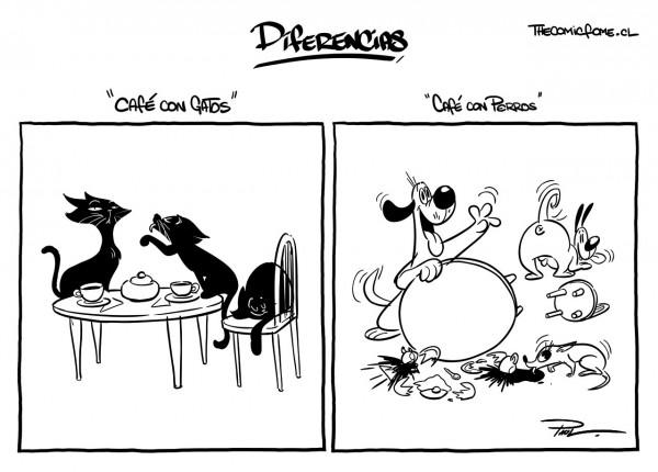 Diferencias entre gatos y perros