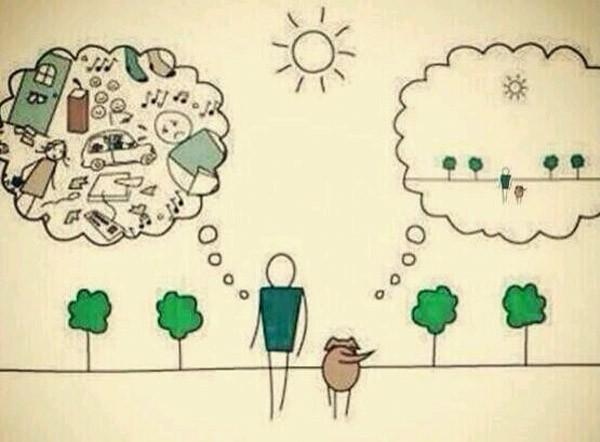 Diferencias entre humanos y perros