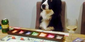 Perrete jugando al monopoly