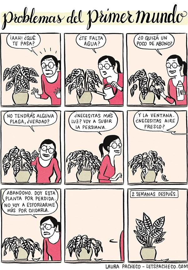 Problemas del primer mundo: plantas