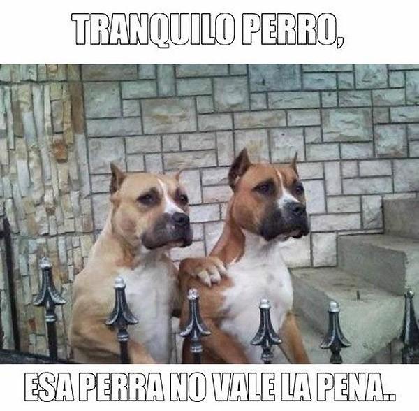 Tranquilo perro