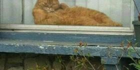 El gato del vecino