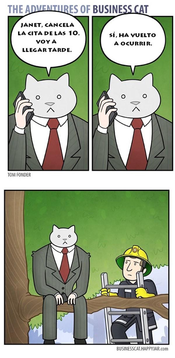 El gato empresario: cancela la cita