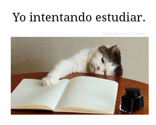 Yo intentando estudiar