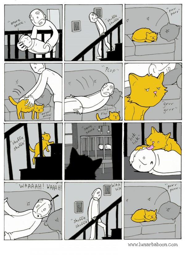 El gato es más listo que tú